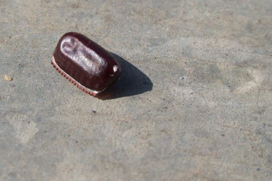 Kakerlaken schlüpfen aus solchen Eikapseln