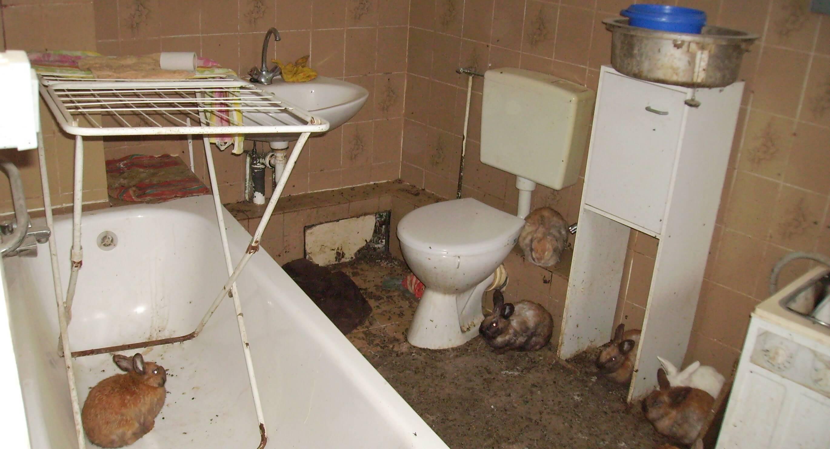 Animal Hoarding Wohnungen müssen gründlich desinfiziert und entseucht werden.